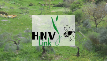Diapositive1 HVN Links