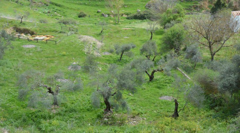 Agriculture à « haute valeur naturelle » : AScA partenaire du projet HNV-Link (H2020) sous la coordination du CIHEAM-IAMM (Montpellier)